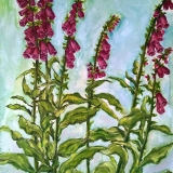 Foxgloves, oil on panel, 80 x 60 cm., 2015