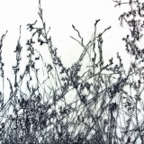 Wildflowers III, charcoal on paper, 50 x 65 cm., 2014